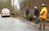 Záchranná stanice dohlíží na kácení starých stromů
