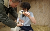 Kontrola labutě po operaci