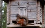 krmítko pro veverky v areálu návštěvnického centra národního parku Syöte