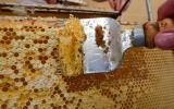 v medárně stáčíme med z pražských lesů