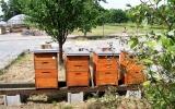 Včelnice