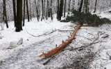 Popadané větve a stromy v Chuchelském háji