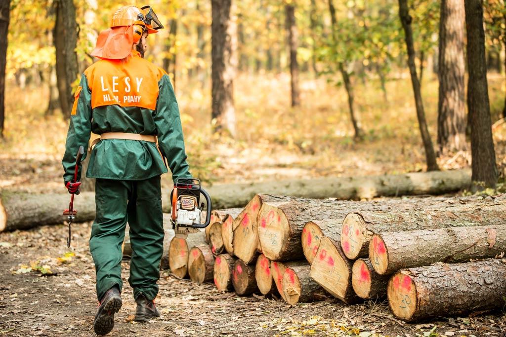 certifikované dřevo