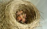 malá ptáčata