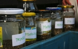 Svačina byla připravena pro všechny. Každá sklenice obsahuje přesně odpočítaný počet semínek 20 lučních druhů rostlin
