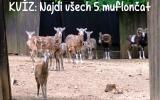 Najdi muflona