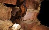 zimující netopýři ve větrací šachtě