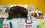 o vysílené a dehydrované ježky se staráme v záchranné stanici