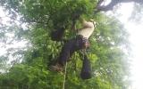 Práce arboristů