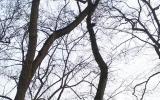 Stromovka_kaceni2