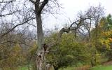 Jeden ze stromů určených k zásahu