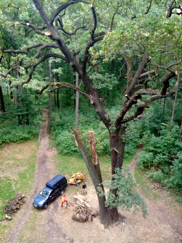 památný dub v Satalicích