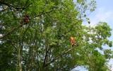 práce v korunách stromů