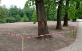 renovace trávníků ve Stromovce