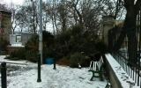 překladiště stromků u pražské Stromovky