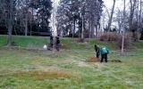 výsadba dřevin