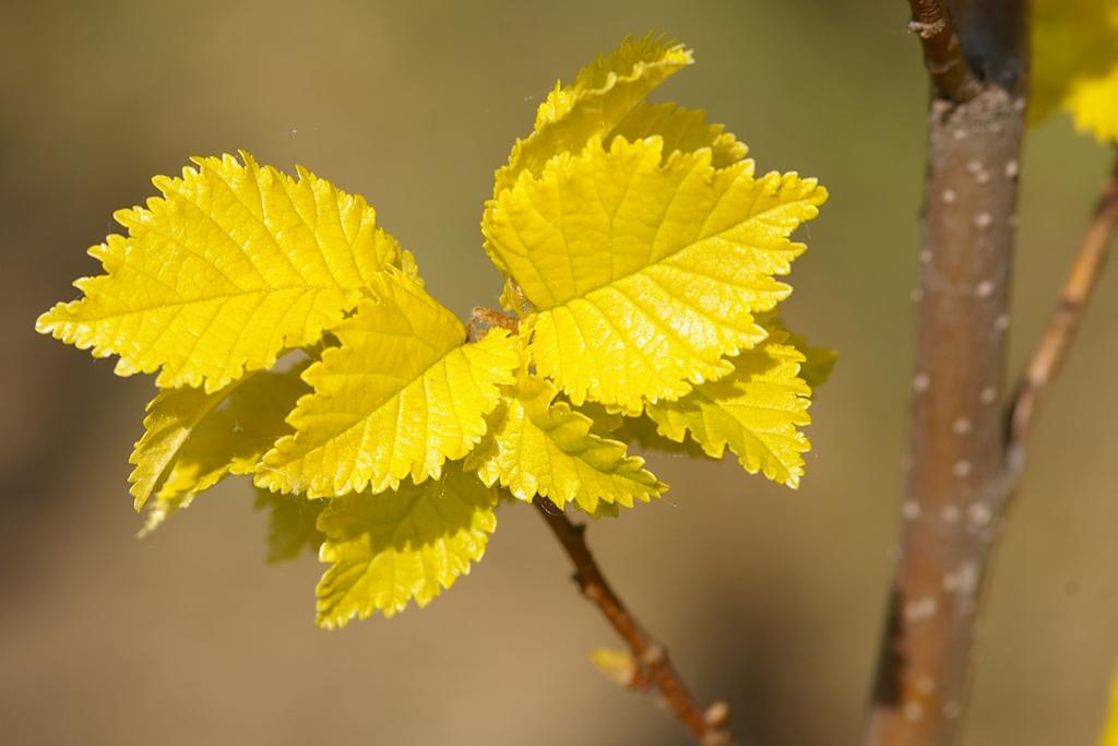 dablice-podzim