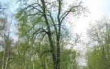 Redukce koruny stromu - nenápadný, ale důležitý výsledek