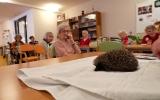 S péčí o ježky nám budou letos pomáhat i senioři