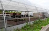 komunitní zahrada v Pralese