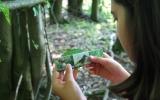 soutěž o největší nalezený list stromu