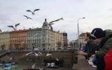Pozorování ptactva na Vltavě