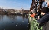 Pozorování ptactva na Vltavě z železničního mostu