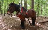 Ukázku své práce předvedl také živý kůň
