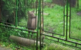 za plotem ve starém domově