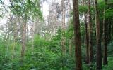 fotografie soukromého lesa napadeného kůrovcem