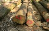napadené stromy odstraňujeme co nejdříve