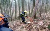 nácvik těžby stromů