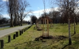 dubové výsadby ve Stromovce