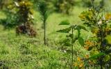 budoucí les V Panenkách
