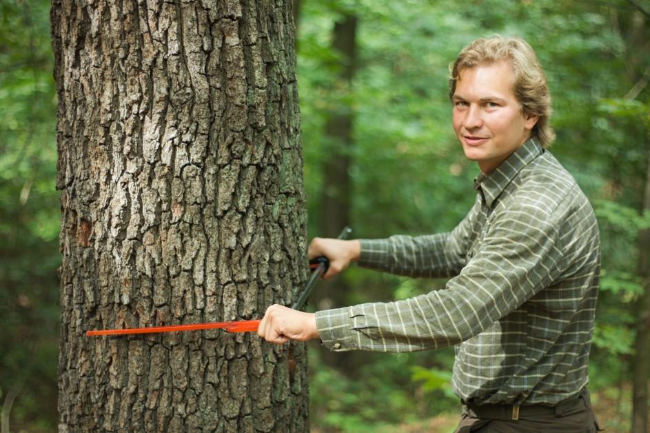 nový lesní