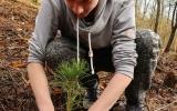 Sázení stromků v Sedlci