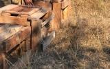 vypouštění zajíců v Divoké Šárce