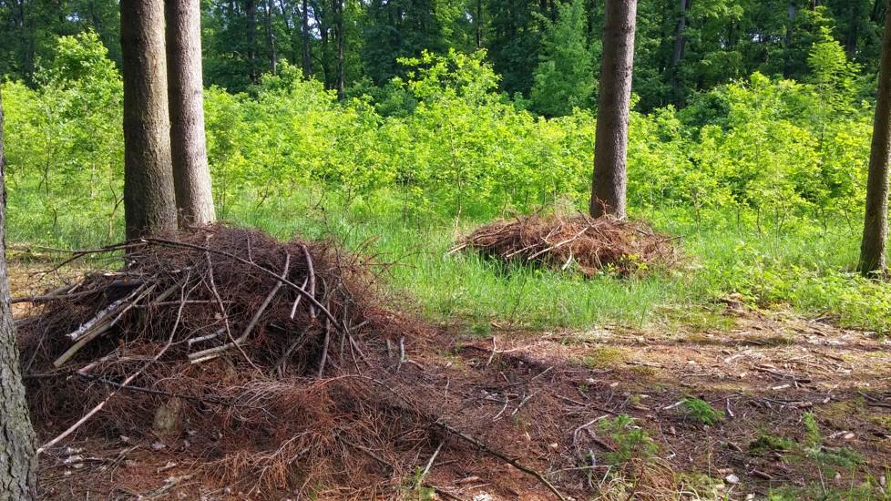 Hromádky suchého klestu k zetlení