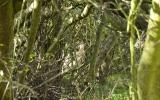 Daněly v divoké zahradě