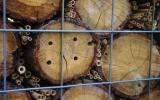 Budování hmyzího hotelu - v dírkách ve dřevě či v rákosových stéblech si hmyz najde útočiště