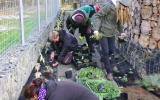Výsadba rostlin v areálu divoké zahrady