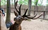 To jsem z toho jelen