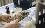 Našim pacientům vždy poskytujeme odbornou veterinární péči