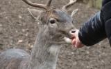 Loňské zvířátkové Vánoce si obyvatelé zookoutku užili