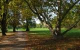 Stromovka - platan u rybníčků
