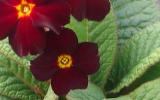 kvet6