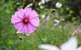 rozkvetle-zahony