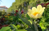 Jiřinkový sad v plném květu