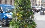 květinová věž na Mariánském náměstí