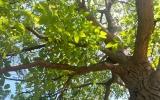 Ořechový sad na Petříně